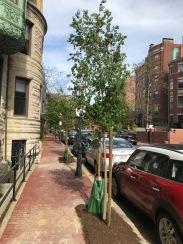 Marlborough Street by The Charlesgate